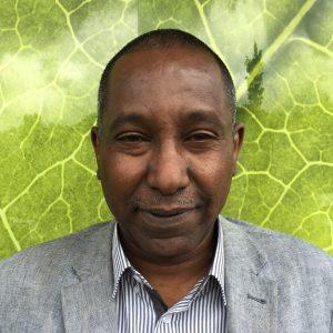 Adil Ibrahim